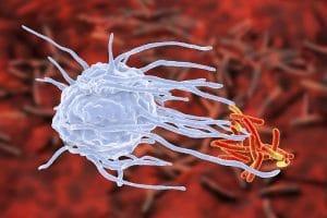 Makrophagenzerlegen krankmachende Eindringlinge in ihre Eiweißbestandteile.
